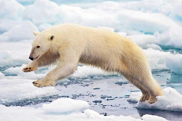 A kiterjesztett valóság segítségével ismerhetnek meg védett állatokat a mosonmagyaróvári Futurában