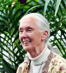 Májusban látogat újból Magyarországra Jane Goodall