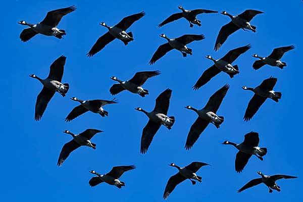 Csaknem 5,2 millió vonuló madarat számoltak meg az Európai Madármegfigyelő Napok résztvevői