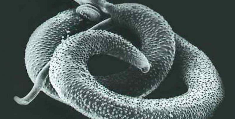 Szaporodásra képes, 24 ezer éves, fagyott organizmusokat találtak Szibériában