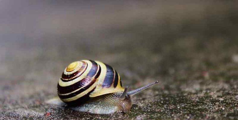 Szülés közben őrzött meg egy 99 millió éve élt csigát egy borostyánkő